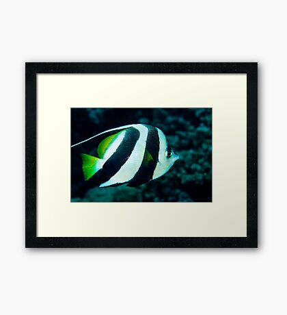 Banner Fish Framed Print