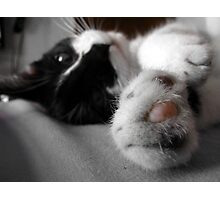 Pawsies Photographic Print