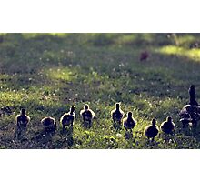 get your ducks in a row Photographic Print
