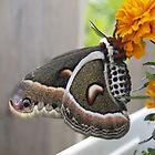 Butterfly by Darren Spidell