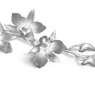 Pencil Drawing of Orchid Flowers by Evelyn Sichrovsky