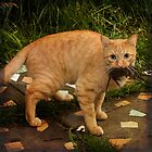 Orange cat with prey by oxygen