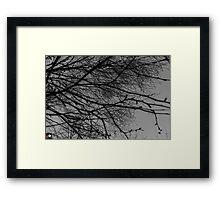 Lurking Series Framed Print