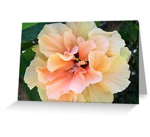 Fancy Hibiscus Greeting Card
