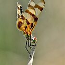 Female Halloween Pennant by Nick Conde-Dudding
