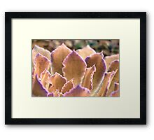 The Glamour Of Color II Framed Print