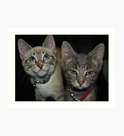 A Tale of Two Kittys Art Print