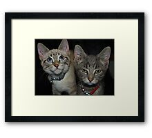 A Tale of Two Kittys Framed Print