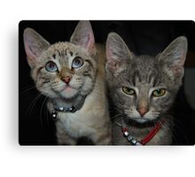 A Tale of Two Kittys Canvas Print