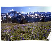 Lupins and Mountians Poster