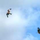 Flypast.. by VoluntaryRanger