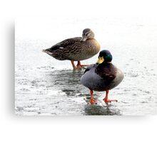 Mr & Mrs Duck Canvas Print