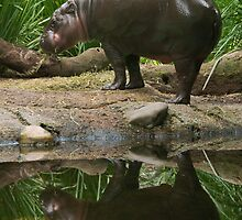 2 Pygmy Hippos ... by rflower