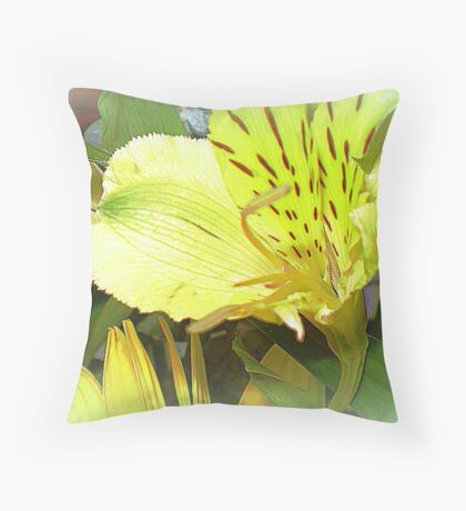 Alstromeria - Sweet and dainty on table  Throw Pillow