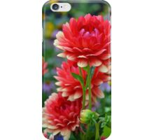 Red and yellow dahlias iPhone Case/Skin