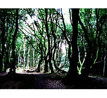 The Forest Of The Trolls Photographic Print