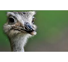 Amusing Emu Photographic Print