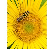 A Golden Plate of Nectar Photographic Print
