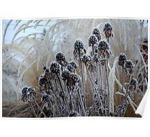 Silverthaw on Seedheads Poster