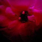 Red Flower. by Vitta