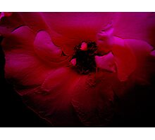 Red Flower. Photographic Print