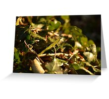 Sunset Leaves Greeting Card
