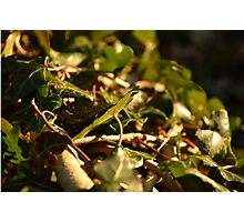 Sunset Leaves Photographic Print
