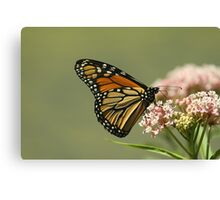 Monarch 2010 Canvas Print