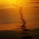 Into the sunrise... by Tamara Travers