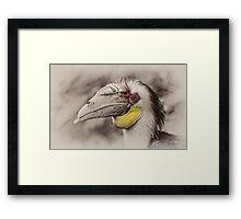 Hornbill Framed Print