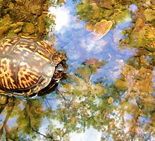 The Little Turtle by SmarttImages