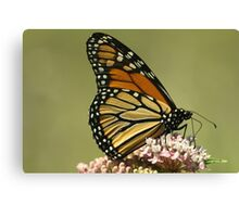 Monarch up close... Canvas Print