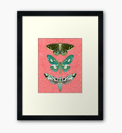 Lepidoptery No. 5 by Andrea Lauren Framed Print