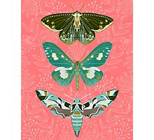 Lepidoptery No. 5 by Andrea Lauren Photographic Print