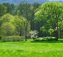 The Little Dogwood by SmarttImages
