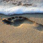 Footprint by mojgan
