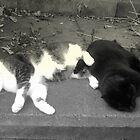 Fudge and Maisie by na320