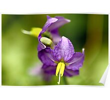 The macro of a wild flower. Poster