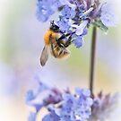 Blue Nectar by Sarah-fiona Helme