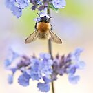 Blue Pollen by Sarah-fiona Helme