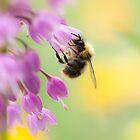 The Nectar Collector by Sarah-fiona Helme
