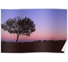 Sunset And A Tree Poster