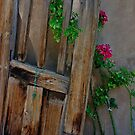Weathered Church Door by David DeWitt