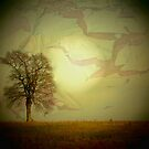 HARVEST MOON by ANNETTE HAGGER