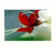 Glory Bower - Clerodendron thomsoniae Art Print