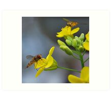 For the love of Hoverfly's. Art Print