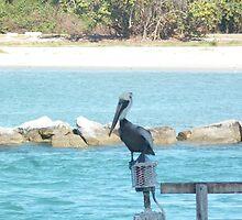 Pelican, Sebastian Inlet, Florida by Maureen Zaharie