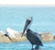 Pelican, Sebastian Inlet, Florida Sticker