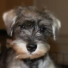 Meet Tucker ... by Andrea Kosciusko