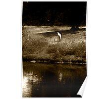 White crane  Poster
